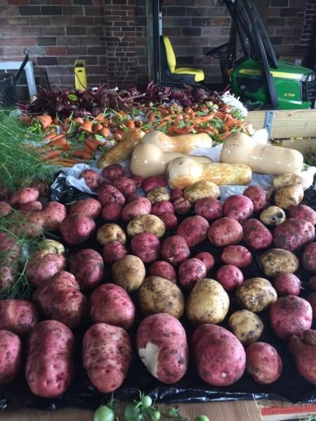 gardenpotatoes